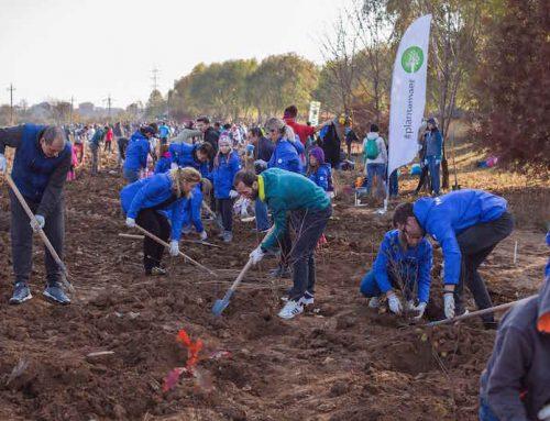 Daikin România a plantat in 2018 mii de copaci pentru un viitor cu aer mai curat