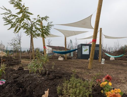 Kaufland România inaugurează o nouă grădină urbană, la Alba Iulia